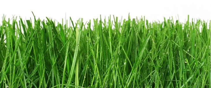 เทคนิคปราบ น้องกอหญ้า ให้อยู่หมัด ง่ายนิดเดียวโน สารเคมี